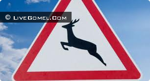 Животное, выскочившее на дорогу, стало причиной крупного ДТП под Гомелем