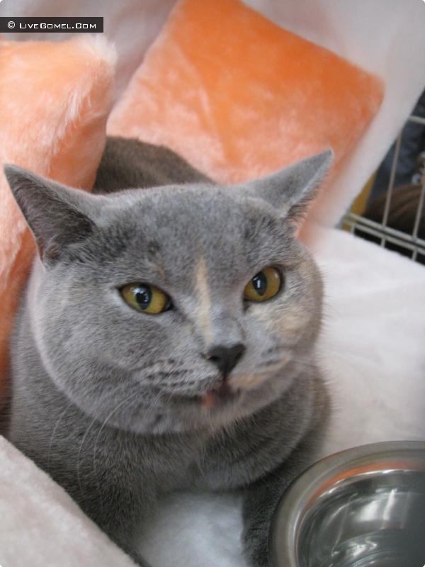 Фестиваль кошек в Гомеле