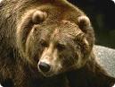 Бурый медведь завелся на Гомельщине