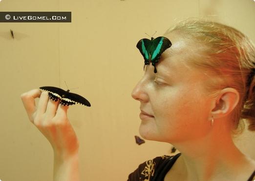Выставка живых тропических бабочек впервые в Гомеле
