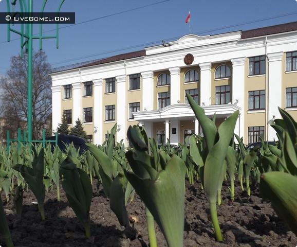 Тюльпаны Железнодорожного района