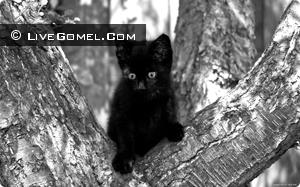 В Гомеле спасали кота целым детским садом