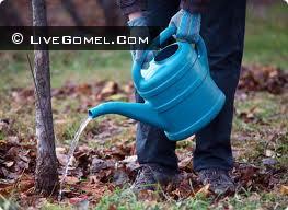 Жителей Мозыря призывают поливать деревья, которые гибнут от жары.