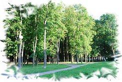 Деревья в большом городе