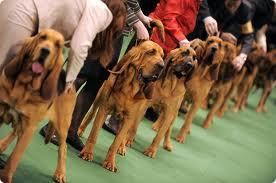 Выставка собак в Гомеле
