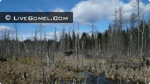 Пропавший без вести мужчина найден в лесу мертвым