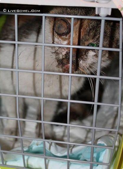 Живодер в Гомеле выбил кошке глаз и сломал челюсть