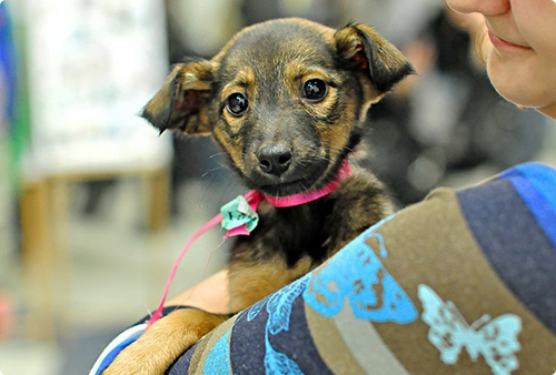16 мая гомельские волонтёры и звезды белорусской эстрады будут искать хозяев бездомным животным