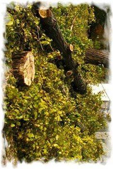 """На общественное обсуждение выносится вопрос сноса деревьев на кладбище """"Осовцы"""""""