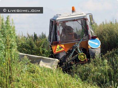 Под Гомелем обнаружена плантация двухметровой конопли