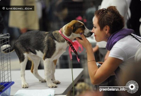 Гомельские волонтёры не теряют надежду открыть пункт передержки бездомных животных