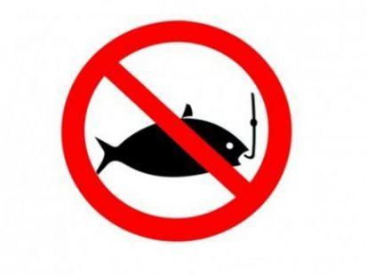 Запрет на ловлю рыбы 2016 в Гомельской области действует с 20 марта по 18 мая