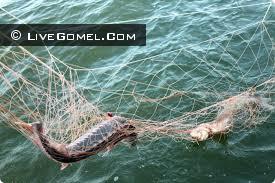 Незаконная добыча рыбы вблизи Наровли