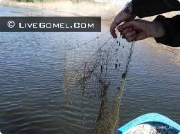 Незаконная добыча озерно-речной рыбы на озере Большое Комарино