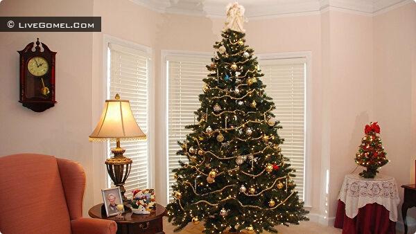 Как выбрать новогоднюю елку к Новому 2022 году?