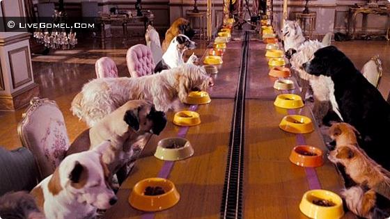 В Гомеле появилась гостиница для домашних животный